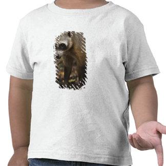 Habituated Crab-eating Raccoon Procyon T Shirt