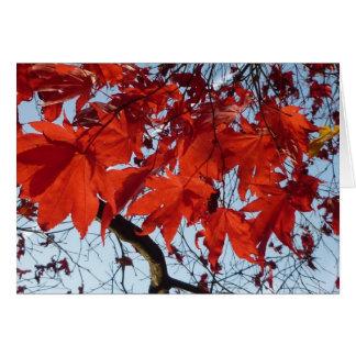 Habla Maple Leaves Tarjeta De Felicitación
