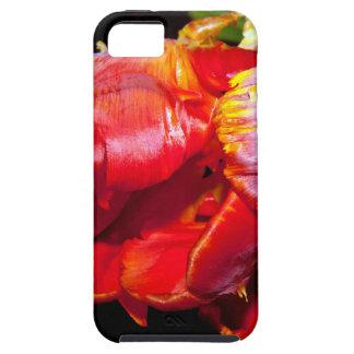HABLA TULIP iPhone 5 FUNDAS