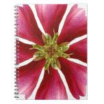 Habla Tulip Tree