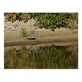 Hablador que vaga en el lago Sithylemenkat Tarjeta Postal