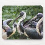 ¿Hace usted parque zoológico? Ibis Paja-necked Alfombrillas De Raton