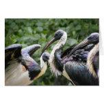 ¿Hace usted parque zoológico? Ibis Paja-necked Tarjetón