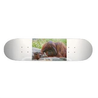 Hacen una oferta el mono tabla de skate