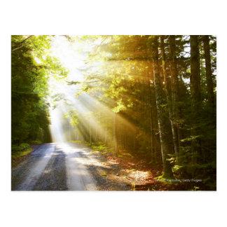 Haces de Sun a través del bosque en parque Postal