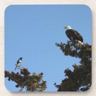 HACES Eagle calvo y Staredown de la urraca Posavasos