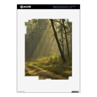 Haces luminosos de la mañana a través de árboles e iPad 3 skins