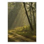Haces luminosos de la mañana a través de árboles e felicitaciones