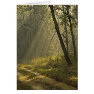 Haces luminosos de la mañana a través de árboles e tarjeta de felicitación