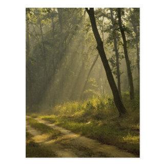Haces luminosos de la mañana a través de árboles tarjetas postales