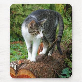 Hacia fuera en un paseo de gato - gatito Mousepad Tapetes De Ratón