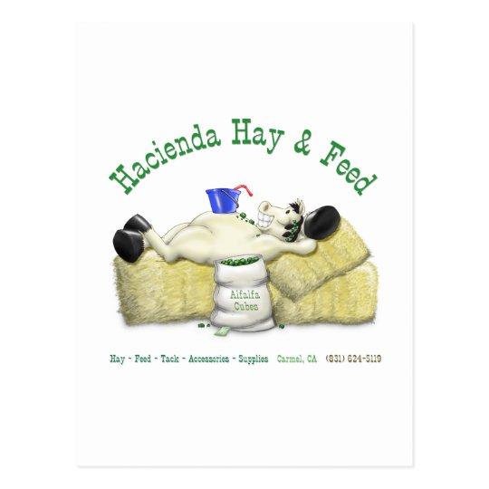 Hacienda Hay & Feed Laid back Horse Postcard