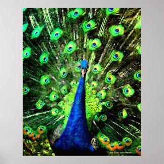 Haciendo el puntal del pavo real (poster del Semi- Póster