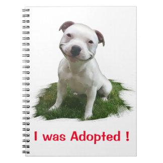 Haciendo muecas Pitbull me adoptaron