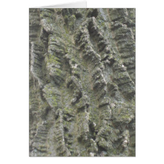 Hackberry bark card