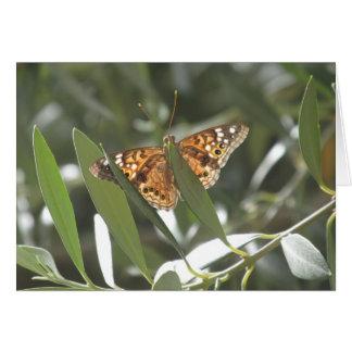 Hackberry Emperor Butterfly Card