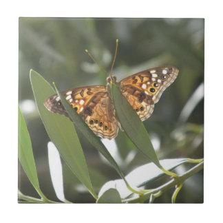 Hackberry Emperor Butterfly Ceramic Tile