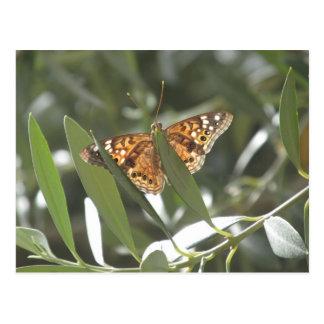 Hackberry Emperor Butterfly Postcard