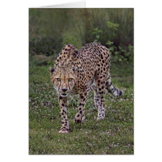 Hackles Up Cheetah Card