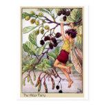 Hada del aliso tarjetas postales