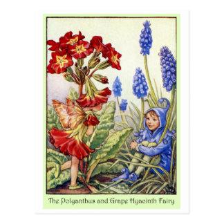 Hada del jacinto del Polyanthus y de uva Postales