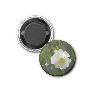 Hada del rosa blanco imanes de nevera