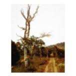 Hadas de la luciérnaga en un camino forestal polvo membretes personalizados