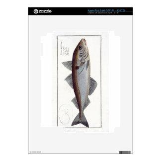 Haddock (Gadus Aeglefinus) plate LXII from 'Ichthy iPad 3 Decals