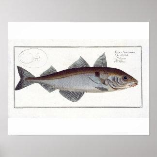 Haddock (Gadus Aeglefinus) plate LXII from 'Ichthy Print