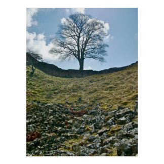 Hadrian's Gap in the Wall, Sycamore Tree Poster