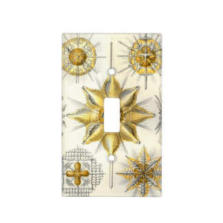 Haeckel Acanthometra Light Switch Cover
