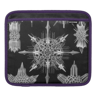 Haeckel Acanthophracta Sleeves For iPads