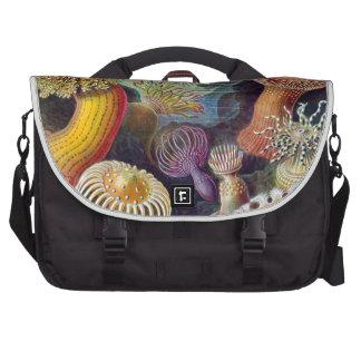 Haeckel Actiniae Computer Bag