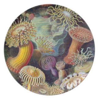Haeckel Actiniae Party Plates