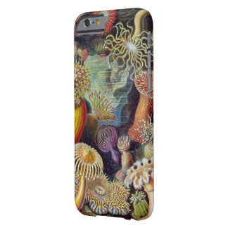 Haeckel Actiniae Vintage Print Barely There iPhone 6 Case
