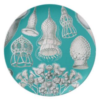 Haeckel adaptable plato de cena
