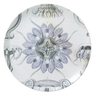 Haeckel adaptable platos