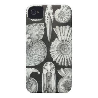 Haeckel Ammonitida Case-Mate iPhone 4 Case