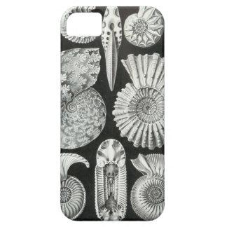 Haeckel Ammonitida iPhone SE/5/5s Case