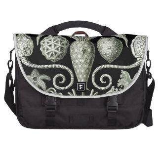 Haeckel Amphoridea Commuter Bag
