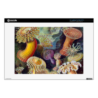 Haeckel anemones view 2 skins for laptops
