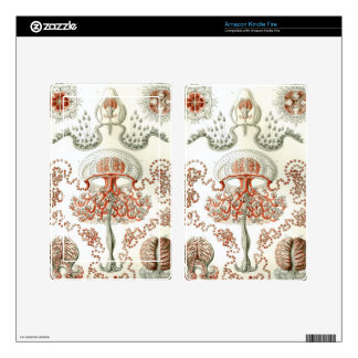 Haeckel Anthomedusae Kindle Fire Decal