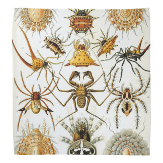 Haeckel Arachnida Bandana