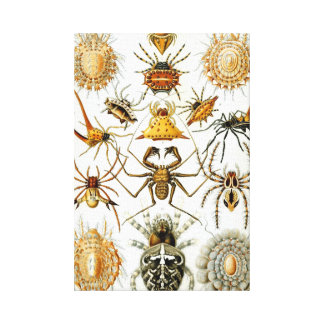Haeckel Arachnida Canvas Print