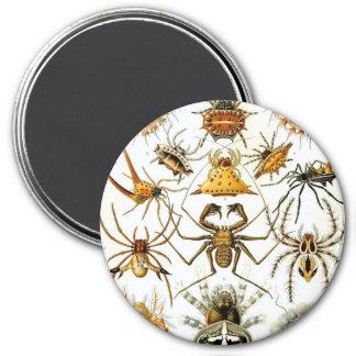Haeckel Arachnida Fridge Magnet