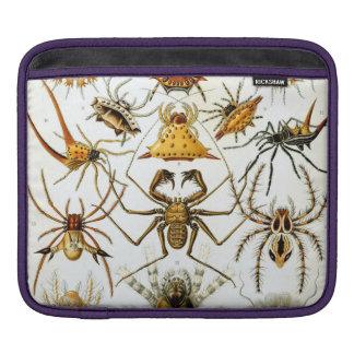 Haeckel Arachnida Sleeves For iPads