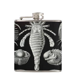 Haeckel Aspidonia Hip Flask