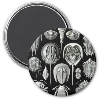 Haeckel Aspidonia Magnet