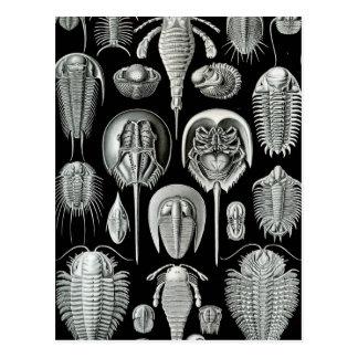 Haeckel Aspidonia Postcard