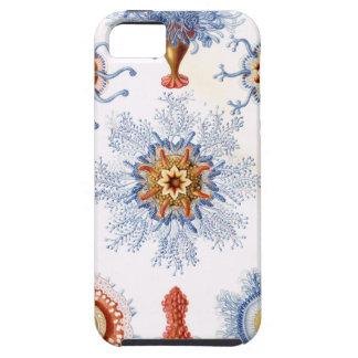 Haeckel blue iPhone 5 case